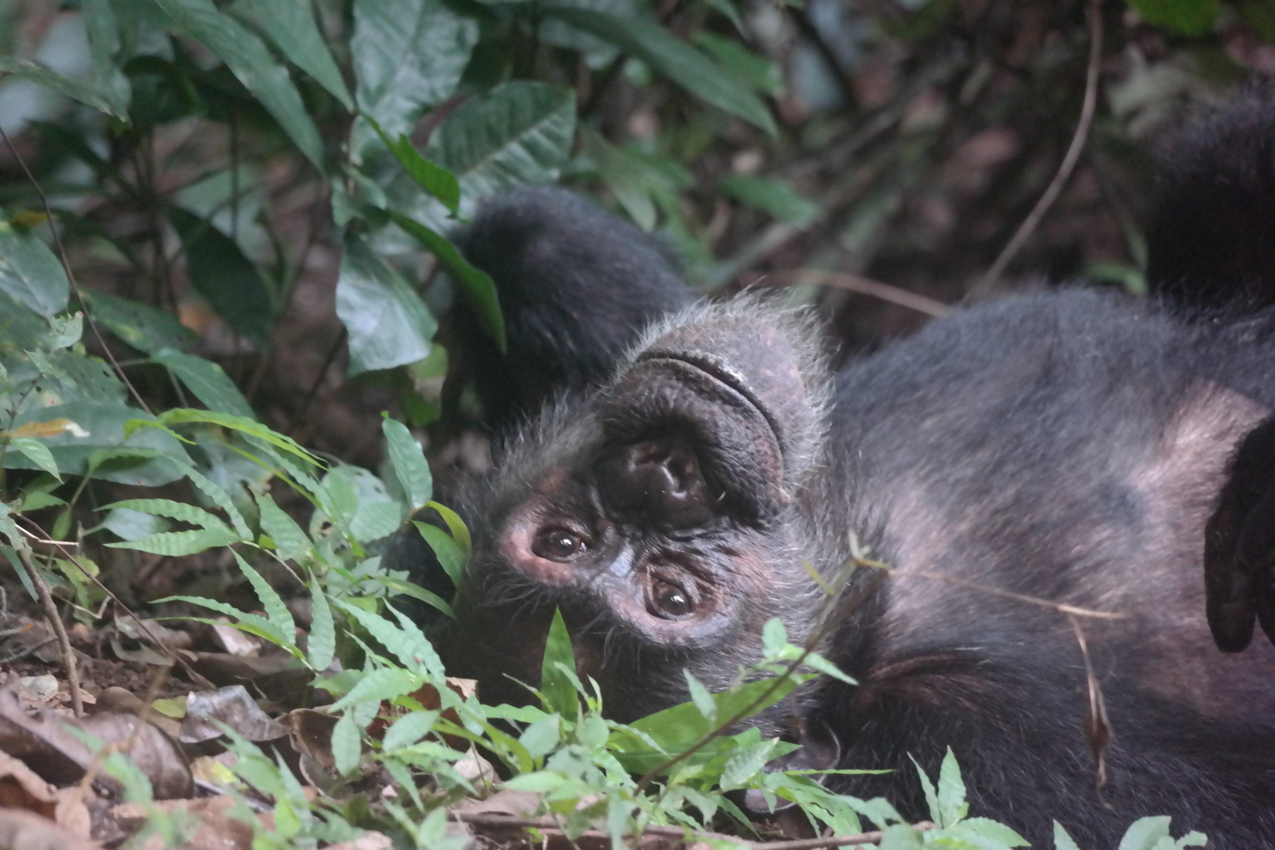Wat contentmarketeers kunnen leren van apen